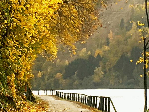 Der Klassiker unter den Radtouren und die beliebteste Fernradtour der Welt ist der Donauradweg von Passau nach Wien - eine ideale Radreise für Einsteiger, Genießer und Familien. Alles was eine gelungene Radtour ausmacht findet man hier: beeindruckende Fluss Landschaften mit steilen bewaldeten Hängen, Weinberge und Obstgärten bietet der Donauradweg. Jede Region entlang dieses sehr gut ausgebauten Radweges hat ihren besonderen Reiz. Die Schlögener Schlinge, der Strudengau, der Nibelungengau oder die Wachau sind ebenso Kulturland mit vielen Sehenswürdigkeiten aus vergangener Zeit der Römer, der Nibelungen und der Kreuzritter. Die Fahrrad Strecke ist nicht nur schön, sondern auch gut zu befahren, sie ist fast durchgehend flach